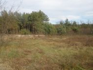Продам участок с лесом